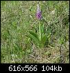 Klicke auf die Grafik für eine größere Ansicht  Name:Orchideen010512 e.jpg Hits:342 Größe:103,7 KB ID:4732