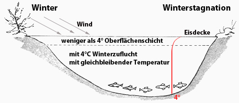 Klicke auf die Grafik für eine größere Ansicht  Name:winter.jpg Hits:21363 Größe:30,1 KB ID:781